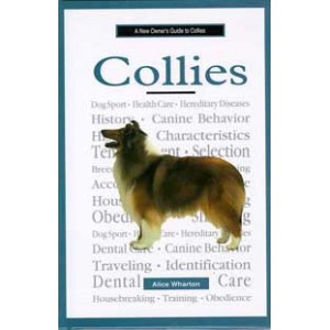 A New Owner's Guide To Collies