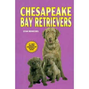 Chesapeke Bay Retrievers